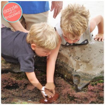 Visit Tide Pool Plaza at Birch Scripps Aquarium and tips for visiting the aquarium with kids | DazzleWhileFrazzled.com